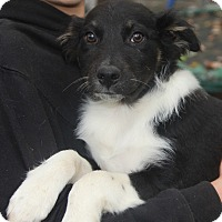 Adopt A Pet :: Teah - Coventry, CT