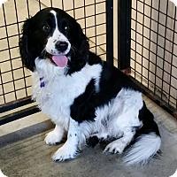 Adopt A Pet :: Bentley - Urbana, OH