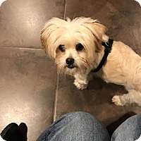 Adopt A Pet :: Chewy - Tenafly, NJ