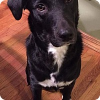 Adopt A Pet :: D Litter-Rosie - Livonia, MI