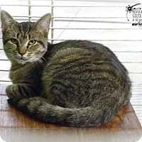 Adopt A Pet :: Poca - Marlinton, WV