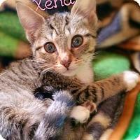 Adopt A Pet :: Xena - York, PA