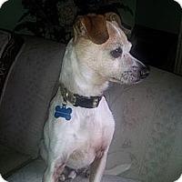 Adopt A Pet :: Gizmo - Puyallup, WA