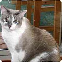 Adopt A Pet :: Frodo - Scottsdale, AZ