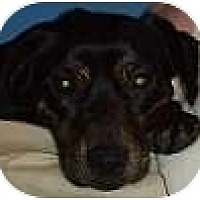 Adopt A Pet :: Chloe - Hamilton, ON