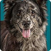Adopt A Pet :: Harmony - Owensboro, KY