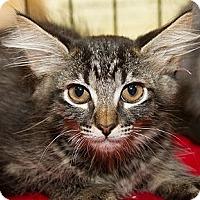 Adopt A Pet :: Sapphire - Irvine, CA