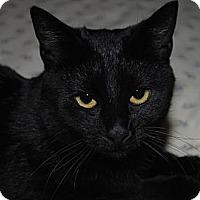 Adopt A Pet :: Ziva - Waxhaw, NC