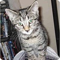 Adopt A Pet :: Rascal - Catasauqua, PA