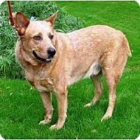 Adopt A Pet :: Dundee - Phoenix, AZ