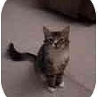 Adopt A Pet :: Twist - Davis, CA