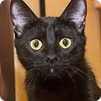 Adopt A Pet :: Iggy - Irvine, CA