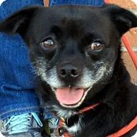 Adopt A Pet :: BINGO (video) - Los Angeles, CA