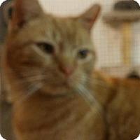 Adopt A Pet :: Rudy - Trevose, PA