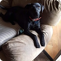 Adopt A Pet :: Bz - Ogden, UT