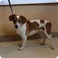 Adopt A Pet :: Sandy - Woodward, OK
