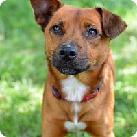 Adopt A Pet :: Fletcher - Delaware, OH