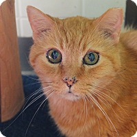 Adopt A Pet :: Radagast - Chicago, IL