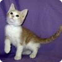 Adopt A Pet :: Mickey - Powell, OH