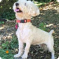 Adopt A Pet :: Victoria - Penngrove, CA