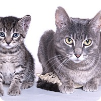 Adopt A Pet :: Cuddles & Squirt - Libertyville, IL