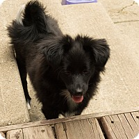 Adopt A Pet :: Spike - Edmonton, AB
