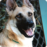 Adopt A Pet :: ETTA VON ETTENHEIM - Los Angeles, CA