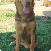 Adopt A Pet :: Thea - Fredericksburg, TX