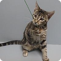 Adopt A Pet :: Paisley - Seguin, TX