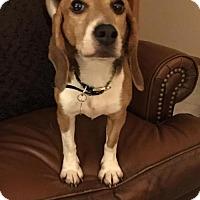 Adopt A Pet :: Paws - Round Lake Beach, IL