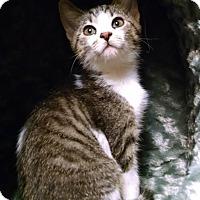 Adopt A Pet :: Lovely - Garden City, MI