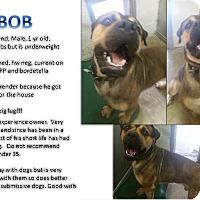 Adopt A Pet :: Bob - CASCADE, WI