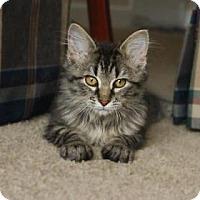 Adopt A Pet :: Deacon - Kansas City, MO
