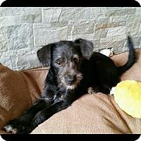 Adopt A Pet :: Alvin - Brea, CA