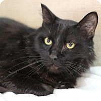 Adopt A Pet :: Ambrose - Midland, MI