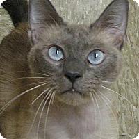 Adopt A Pet :: Lucky 7 - Tulsa, OK