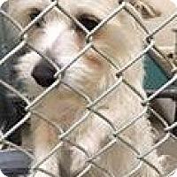 Adopt A Pet :: Austin-Adoption Pending - Boulder, CO