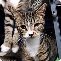 Adopt A Pet :: Harrison - Tomball, TX