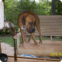 Adopt A Pet :: Ben - Wedowee, AL