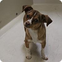 Adopt A Pet :: A20 Clover - Odessa, TX