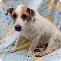 Adopt A Pet :: ROCKY - Inland Empire, CA