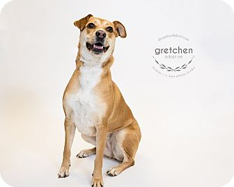 Retriever (Unknown Type) Mix Dog for adoption in Kansas City, Missouri - Gretchen
