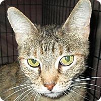 Adopt A Pet :: Anji - Winchester, CA