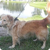 Adopt A Pet :: Rango - Orange Park, FL