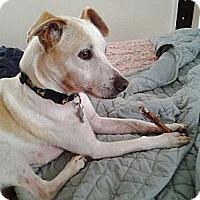 Adopt A Pet :: Declan - Jacksonville, FL