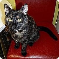 Adopt A Pet :: Brindle - Byron Center, MI