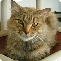 Adopt A Pet :: Tigress - Hamburg, NY