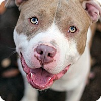 Adopt A Pet :: Rico - Tinton Falls, NJ