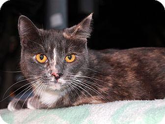Calico Cat for adoption in Redlands, California - Agatha