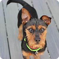 Adopt A Pet :: Otis - Smyrna, GA